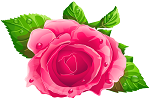 Ilustracja do artykułu Pink_Rose_PNG_Clipart.png